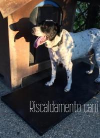 Blog - STEACOM S.r.l. - Mini pedana riscaldante per animali SKALDEMUL